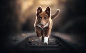 Picture background, dog, railroad