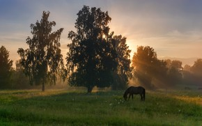 Picture field, forest, summer, the sky, grass, the sun, rays, trees, landscape, nature, Park, horse, dawn, ...