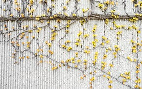 Picture Autumn, Trees, Leaves, Wall