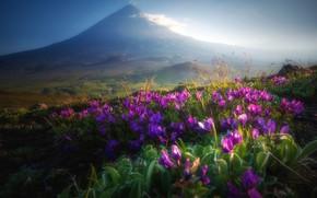 Picture landscape, flowers, nature, fog, the evening, the volcano, Kamchatka, Klyuchevskaya Sopka, Алексей Кретов
