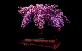 Picture books, bouquet, black background, still life, lilac