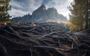 Picture mountains, nature, roots, morning