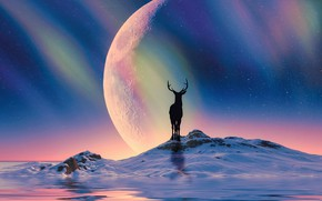 Picture winter, snow, night, rendering, hills, planet, Northern lights, deer, silhouette, art, Arctic, North, polar lights, …