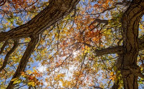 Picture autumn, the sky, trees, branches, nature, foliage, view, view, autumn leaves