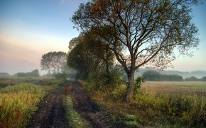 Picture road, autumn, fog, morning