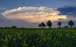 Picture field, the sky, clouds, trees, flowers, rape, rapeseed field