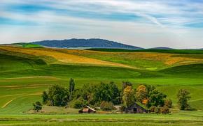 Picture the sky, the sun, trees, field, houses, Washington, USA, Palouse Wheat Fields