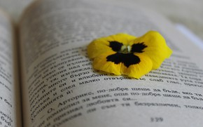 Picture Flower, Macro, Mood, Book