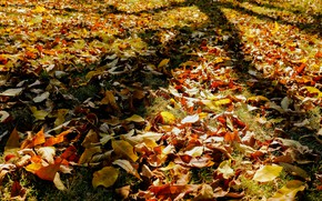 Picture autumn, grass, leaves, light, glade, foliage, bright, yellow, shadows, orange, falling leaves, a lot, the …