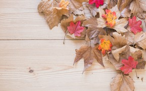 Wallpaper autumn, leaves, background, Board, colorful, maple, wood, background, autumn, leaves, autumn, maple