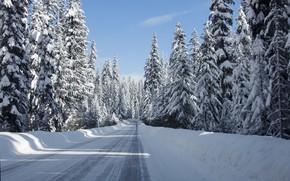 Picture winter, road, snow, landscape, road, landscape, winter, snow, tree
