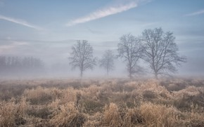 Picture field, autumn, trees, fog