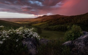 Picture the storm, greens, forest, summer, the sky, flowers, mountains, clouds, stones, hills, the slopes, forest, …