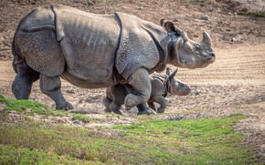 Picture baby, Rhino, mom