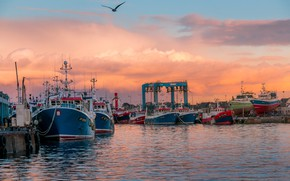 Picture sea, the sky, clouds, sunset, France, ships, Seagull, port, piers, Brittany, Guilvinec