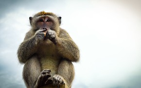 Picture Bali, Indonesia, Bali monkey, Ulluwatu