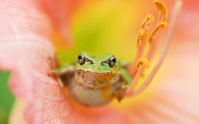 Picture flower, nature, frog
