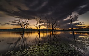 Picture leaves, trees, reflection, twilight, pond