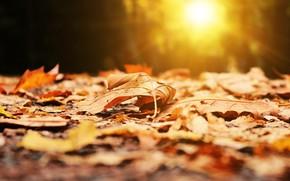 Picture the sun, blur, autumn leaves