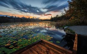 Picture leaves, the city, lake, pond, shore, Board, bridges, pond