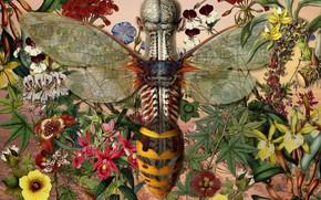 Picture Bee, Anatomy, Artist, Juan Gatti, Taxidermy, Taxidermia