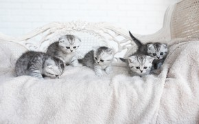 Picture kittens, company, grey