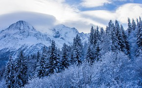Picture winter, forest, the sky, clouds, snow, trees, mountains, nature, rocks, France, ate, Alps, Blanc