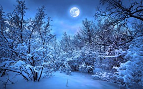 Picture winter, forest, the moon
