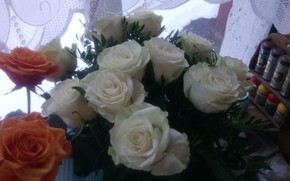 Picture flowers, Roses, white