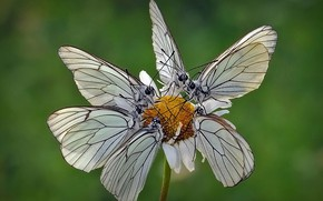 Picture flower, butterfly, moth