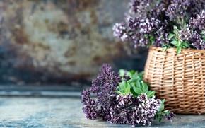 Picture table, basket, bouquet, oregano