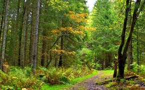 Picture forest, landscape, nature, beauty
