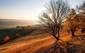 Picture sunset, Autumn, Moldova