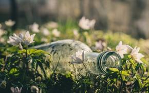 Picture macro, flowers, bottle