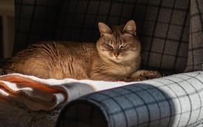 Picture cat, cat, comfort, house, sofa, lies, towels