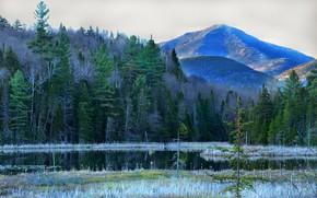 Picture forest, landscape, mountains, river