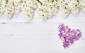 Picture flowers, heart, white, love, white, heart, wood, flowers, lilac, romantic, spring, lilac, floral