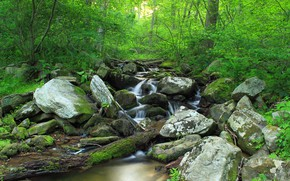 Picture Nature, Trees, Forest, Stones, Stream, Moss