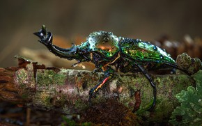 Picture drops, macro, nature, green, background, tree, beetle, horns, insect, bark, brilliant, bitch
