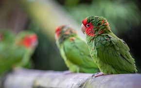 Picture birds, green, bird, parrot, parrots, log, bokeh, Amazon