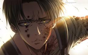 Picture Attack Of The Titans, Shingeki No Kyojin, corporal Levi