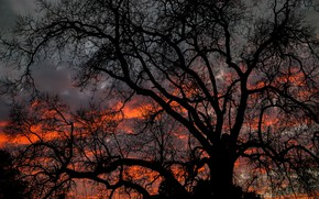 Picture dark, twilight, sky, nature, sunset, clouds, tree, dusk, branches, 5k hd background