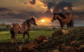 Wallpaper field, summer, the sky, the sun, clouds, light, landscape, sunset, clouds, nature, stones, two, horses, ...