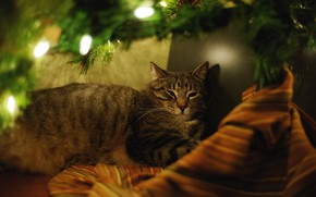 Picture cat, cat, branches, comfort, darkness, holiday, new year, Christmas, lights, lies, tree, needles, garland, material, …