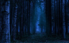 Picture forest, trees, night, nature, Germany