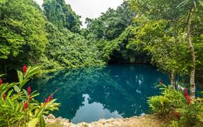 Picture greens, trees, flowers, tropics, pond, Park, the bushes, Vanuatu