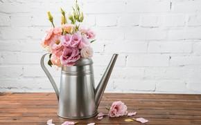 Picture petals, Bouquet, eustoma