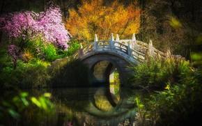 Picture flowers, bridge, Sakura, grass