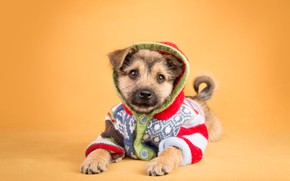 Wallpaper look, orange, background, clothing, dog, baby, costume, hood, outfit, puppy, lies, jacket, face, sweater, ponytail, ...