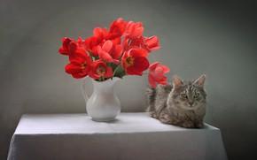 Picture cat, cat, flowers, table, animal, tulips, pitcher, tablecloth, Kovaleva Svetlana, Svetlana Kovaleva